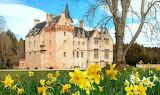 Brodie-Castle-Daffodil-Scotland