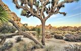First Light at Hidden Valley Joshua Tree Park California