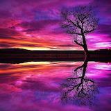 Purple Sunset-2