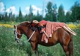 Asleep on the horse's back