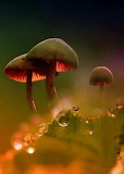 Toadstools softly glowing