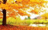 #Autumn Scenery