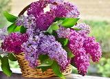 Lilacs in a Wicker Basket