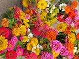 ^ Zinnias, such a sun loving, heat tolerant, hearty flower
