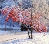 Winter Landscape by Savanna