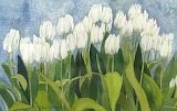^ White Tulip Field Watercolor