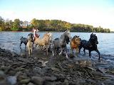 lake herd