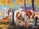 McTigue's Horses Farm
