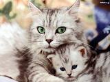 So-freakin-cute--cats-248645 1024 768 jpeg