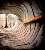 Through curl of fallen Leaf