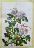 Botanique (8)