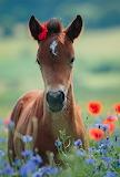 ❤️Cute Foal...