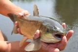 Fishy-fishy-1369283