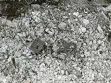 Les décombres du phare du Cap Ferret, janvier 1945