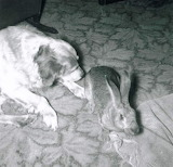 Dog with Rabbit Amos Oscar
