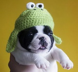 Im_A_Frog_Woof