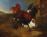 Melchior de hondecoeter poultry