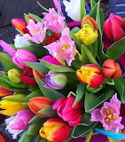 Tulips & Lillies