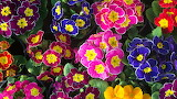 1.flower-colorful-flowers