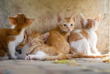 Cute kittens of white and red color