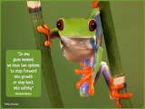 Frog and quote