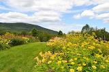 Upward Meadow