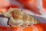 Shell, beach towel, orange color