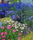 Garden in Victoria, Canada