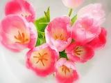 Dreamy Tulips...