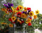 ^ Daisies, Poppies, Irises