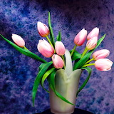 Pink Tulips...