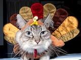 turkey-cat