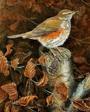 Winter Visitor; Redwing
