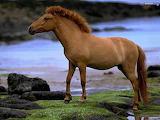 Wild horses wallpapers 24