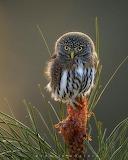Birds tumblr dogstardreaming Owl