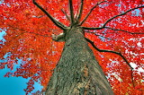 Look Up to Autumn