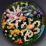 Under the Sea Paperweight