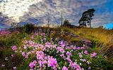 Pink wild flowers