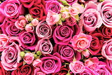 #Valentine's Day Roses Getty Image