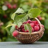 basket of raspberries
