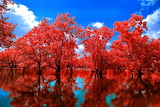 ☺ Red reflections...