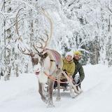 Rovaniemi Reindeer Ride