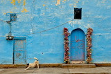 Dog stretches in front of a small church in Xoconusco, Mexico