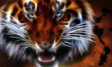 TigerFractal