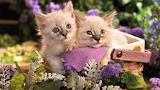 #Cute Kitties in a Garden Basket