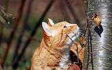 Cat collektion1w (90)