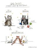 Talese Street Cats NY