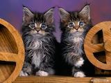 Cat-cute-looking-away
