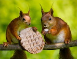 Snacking Squirrels