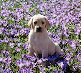 Puppie among flowers